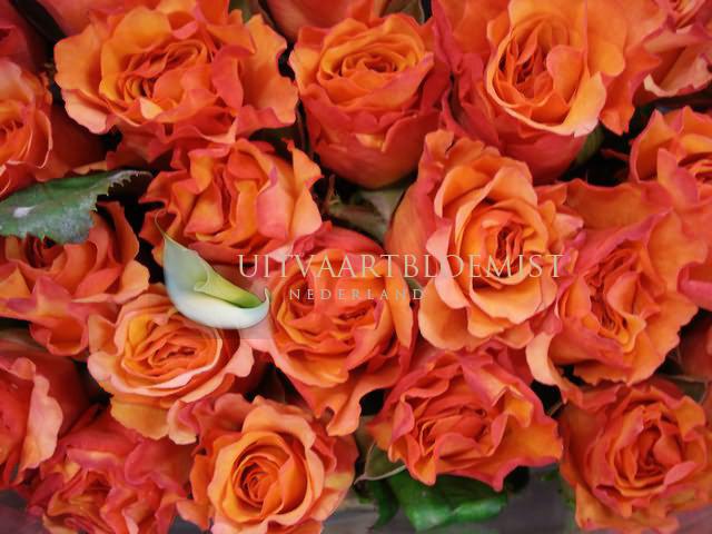 Losse Rozen Oranje